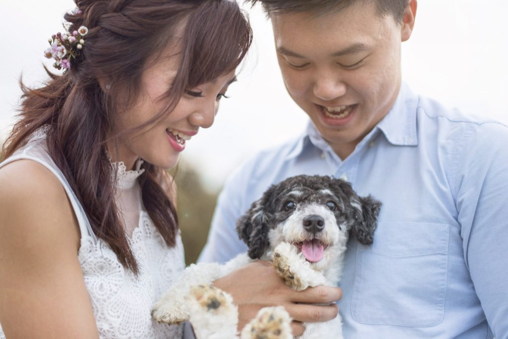 pre-wedding photoshoot with pets.